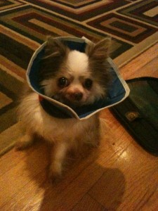 Daggett and his Cone of Shame